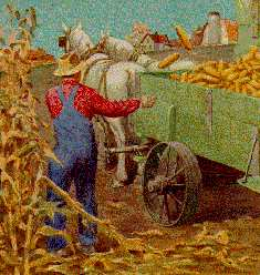 lughnasadh harvesting corn