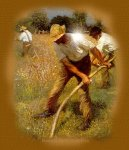 lughnasadh harvesting wheat