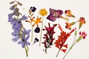 Summer Flower 4