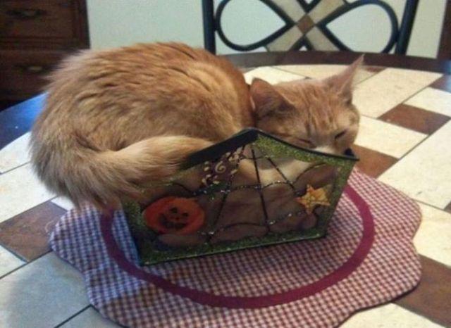 Awkward cat sleep Hween
