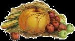 harvest motif