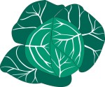 food motif veg cabbage