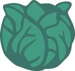 food motif veg lettuce