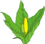 skunk cabbage plant motif