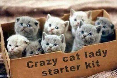 Joke crazy cat lady
