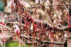 feast 0302 Martenitsa_magnolia