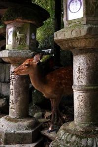 feast 0313 kasuga-shrine-nara