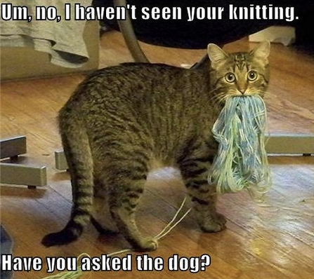 funny cat yarn