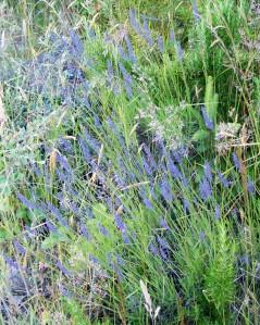063014 front lavend