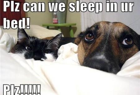 Pet funny
