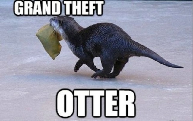 funny grand theft otter