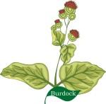 burdock plant motif