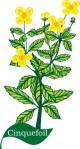 flower motif cinquefoil
