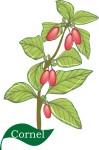 flower motif cornel