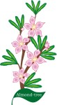 plant flower motif almond