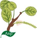 plant flower motif asp