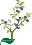 plant flower motif bilberry