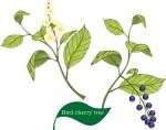 plant flower motif birdcherry