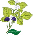 plant flower motif blackberry