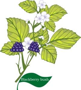 plant flower motif blackberry