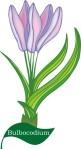 plant flower motif bulbacodium