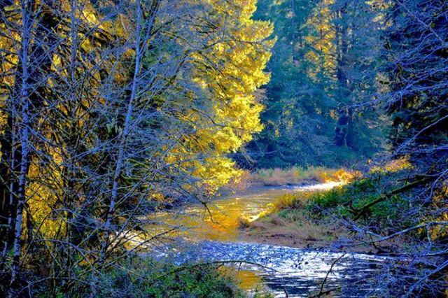 111814 Ken Gagne Yachats River
