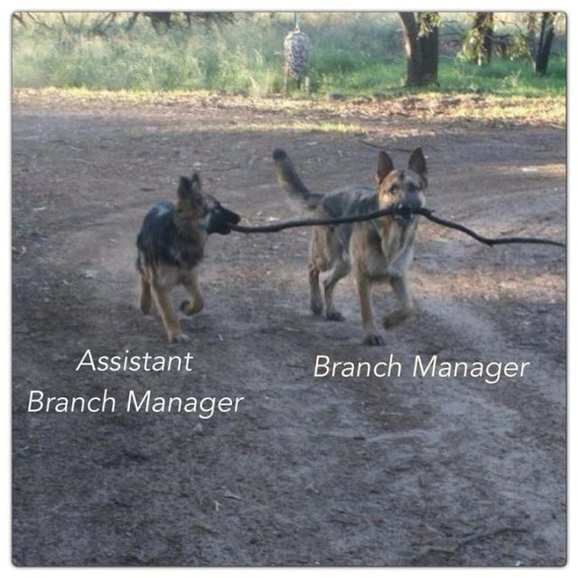 Funny Branch Manager