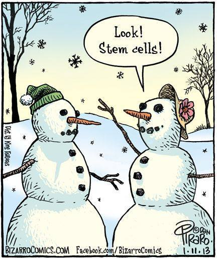 FUnny snowman stem cells