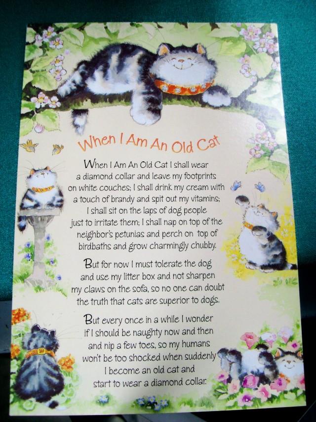 020915 Card Cat