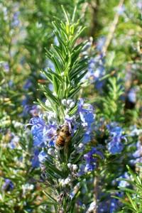 021415 Bee