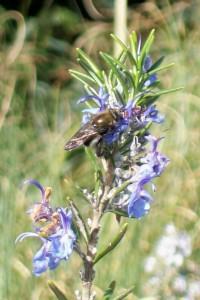 021415 Bee2