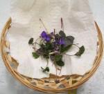 022215 violets