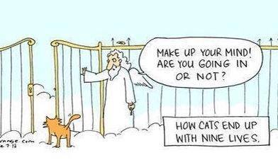 heaven with cats funny