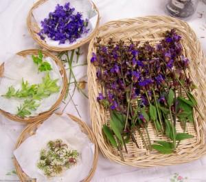 050915 Herbs