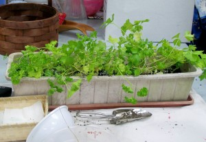 050915 New Parsley