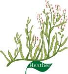 plant motif heather flower herb