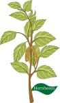 plant motif hornbeam tree