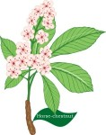 plant motif horse chestnut tree flower