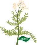plant motif milfoil herb
