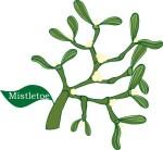 plant motif mistletoe herb