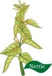 plant motif nettle herb