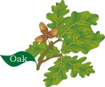 plant motif oak tree acorn