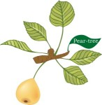 Plant motif pear tree