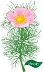 Plant motif peony flower