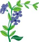 Plant motif periwinkle flower
