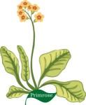 Plant motif Primrose