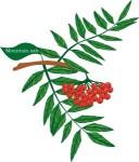 plant motif rowan tree