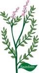 Plant motif sainfoin herb