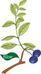 Plant motif sloe plum tree