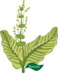 Plant motif sorrel herb